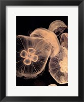 Framed Graphic Jellyfish I