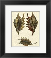 Framed Crackled Antique Shells V
