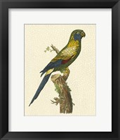 Framed Crackled Antique Parrot I