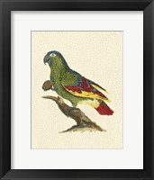 Framed Crackled Antique Parrot II