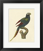 Framed Crackled Antique Parrot III