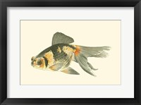 Framed Telescope Goldfish