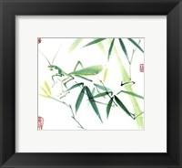 Framed Mantis