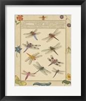 Framed Dragonfly Manuscript III