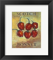 Scotch Bonnet Framed Print
