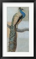 Framed Resting Peacock I