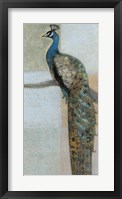 Framed Resting Peacock II
