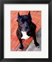 Framed Blueberry Pit Bull