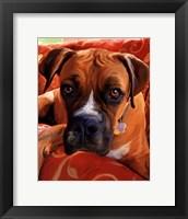Framed Harry Boxer