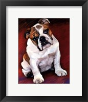 Framed Bulldog Baby