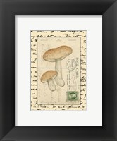 Framed Mushrooms II