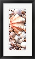 Shell Menagerie I Framed Print