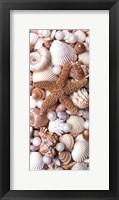 Shell Menagerie II Framed Print