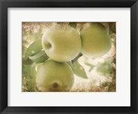 Framed Vintage Apples II