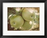 Framed Vintage Apples III