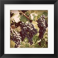 Framed Vintage Grape Vines I