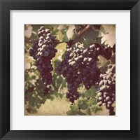 Framed Vintage Grape Vines III