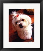 Mini Maltese Framed Print