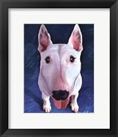 Framed Bull Terrier Bronson