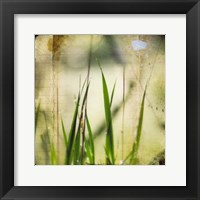 Framed Green II