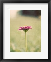 Framed Flower Portrait I