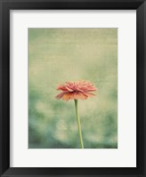 Framed Flower Portrait III