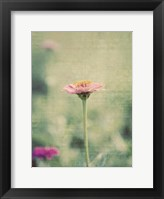 Framed Flower Portrait IV