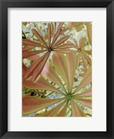 Framed Woodland Plants in Red III