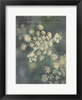Framed Queen Ann's Lace III