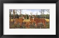 Framed Grazing Deer