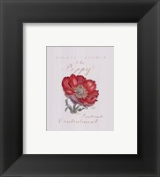 August's Flower, The Poppy Framed Print