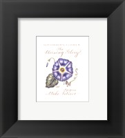September's Flower, Morning Glory Framed Print
