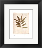 Bay Leaves Framed Print