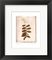 Tendril Framed Print