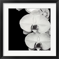 Framed Orchid Portrait II
