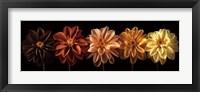 Framed Floral Salute
