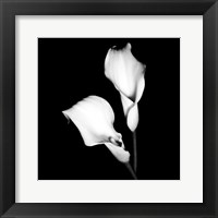 Framed Calla Portrait I