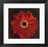 Midnight Gerbera III Framed Print