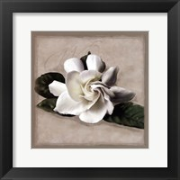 Framed Botanical Gardenia