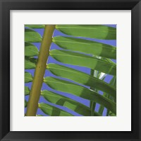 Framed Palm Collection I