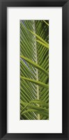 Palm Collection V Framed Print