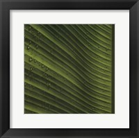 Framed Perfect Leaf I