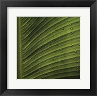 Framed Perfect Leaf II