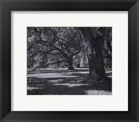 Framed Broadfield I