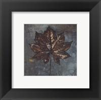 Maple IV Framed Print