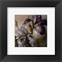 Irises After the Rain Framed Print
