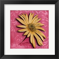 Blooming Daisy II Framed Print