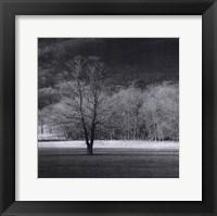Framed Cades Tree II