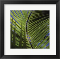 Palm Collection III Framed Print
