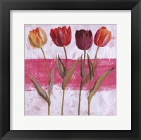 Framed Tulipe sur Rose